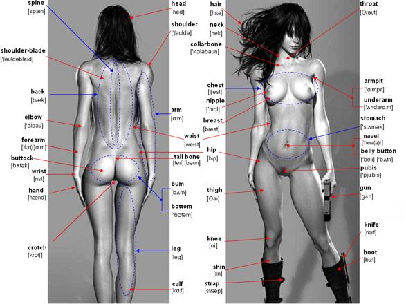 названия частей тела на английском